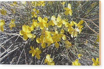 Wood Print featuring the photograph Wild Desert Flowers by Kume Bryant