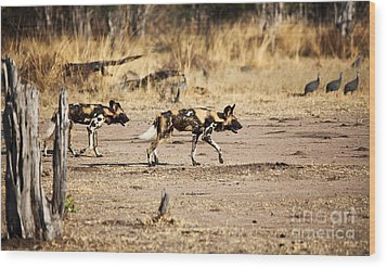 Wild Dogs Wood Print by Gualtiero Boffi