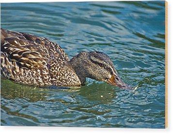 Wild Duck Wood Print by Susan Leggett