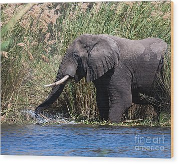 Wood Print featuring the photograph Wild Elephant Splashing In Water by Karen Lee Ensley