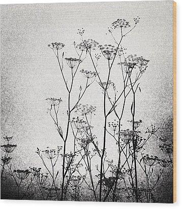 Wild Fennel #fennel Wood Print by Denise Taylor