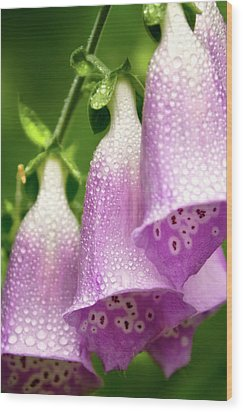 Wood Print featuring the photograph Wild Foxglove by Albert Seger