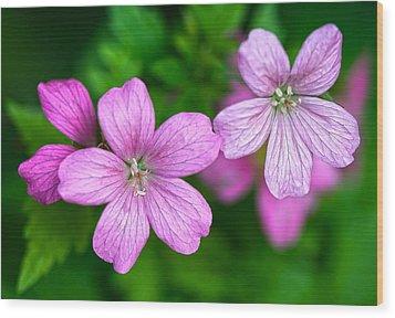 Wild Geranium Wood Print