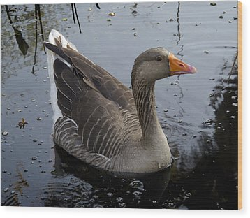 Wood Print featuring the photograph Wild Greylag Goose by Lynn Palmer