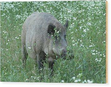Wild Hog Between Flowers Wood Print by Ulrich Kunst And Bettina Scheidulin