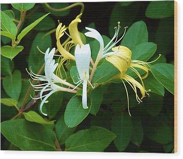 Wild Honeysuckle Vine Wood Print by Jeanette Oberholtzer
