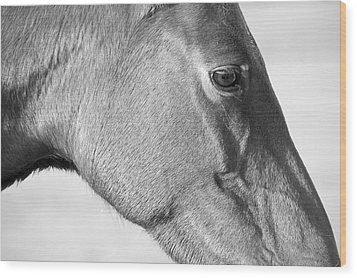 Wild Horse Intimate Wood Print