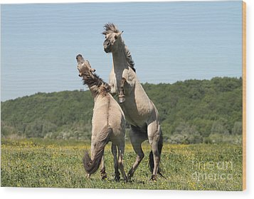 Wild Horses Wood Print by Masterbrickert Photography