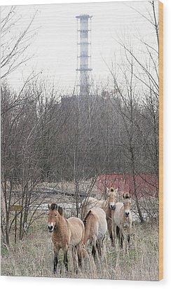 Wild Horses Near Chernobyl Wood Print by Ria Novosti