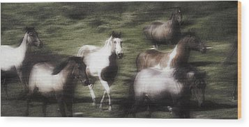 Wild Horses On The Move Wood Print by Don Hammond