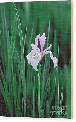 Wood Print featuring the photograph Wild Iris by Doug Herr