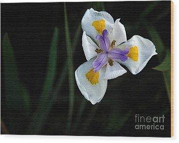 Wild Iris Wood Print by Kaye Menner