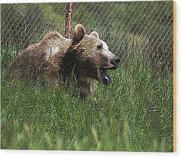 Wild Life Safari Bear Wood Print