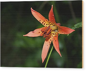 Wood Print featuring the photograph Wild Lilly by Laurinda Bowling