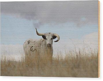 Wild Longhorn Wood Print
