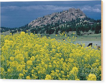 Wild Mustard Wood Print by James Steinberg and Photo Researchers