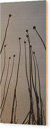 Wild Onions Wood Print by Stelios Kleanthous
