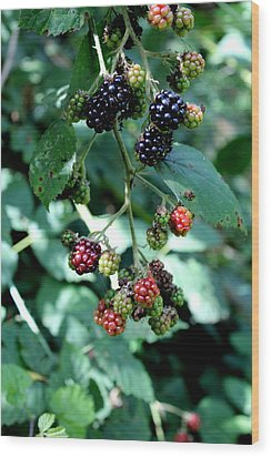 Wood Print featuring the photograph Wild Oregon Blackberries by Jo Sheehan