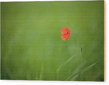 Wild Poppy Wood Print by Peter Chadwick LRPS