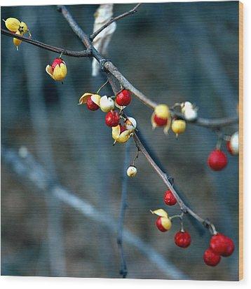 Wild Red Berries Out Of The Shell Wood Print by LeeAnn McLaneGoetz McLaneGoetzStudioLLCcom