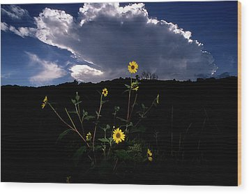 Wild Sunflower With Clouds Wood Print