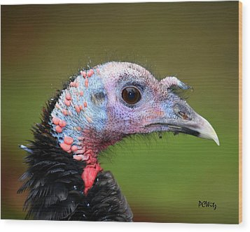 Wild Turkey Wood Print by Patrick Witz