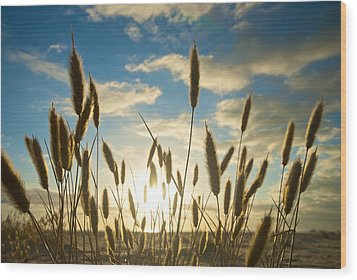 Wild Wheat Growing On The Shores Wood Print by Brooke Whatnall