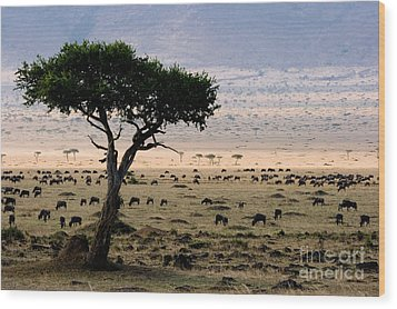 Wildebeest Connochaetes Taurinus Grazing Wood Print by Gregory G. Dimijian, M.D.