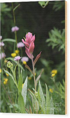 Wood Print featuring the photograph Wildflower by Marta Alfred