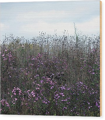 Wildflower Meadow At Markin Glen Wood Print by Penny Hunt