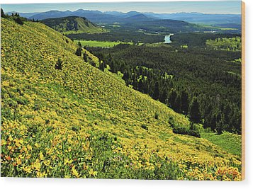 Wildflower Mountain In Wyoming Wood Print by Jeff R Clow