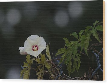 Wood Print featuring the photograph Wildflower On Fence by Ed Gleichman