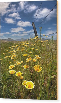 Wildflowers And Barbed Wire Wood Print by Peter Tellone