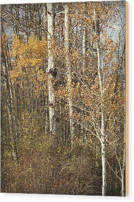 Wildlife Haven Wood Print by Cindy Wright