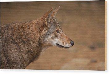 Wile E Coyote Wood Print by Karol Livote