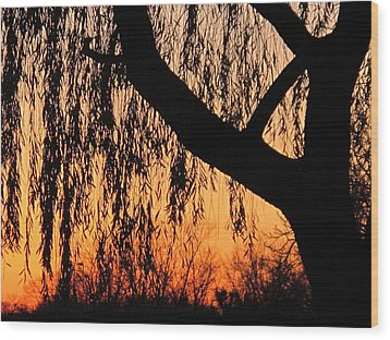 Willow At Sunset Wood Print by Valia Bradshaw