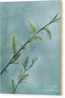 Willow Catkins Wood Print by Priska Wettstein