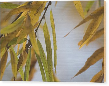Wood Print featuring the photograph Willow Fall Leaves by Lisa Missenda