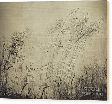 Windblown Wood Print by Arne Hansen