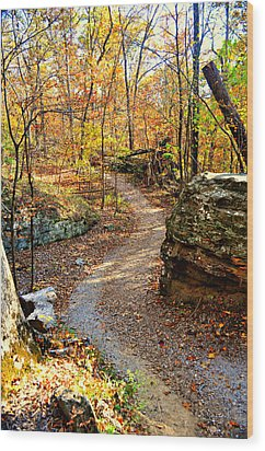 Winding Trail Wood Print by Marty Koch