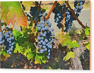 Wine Country Wood Print by Gloria Wannow