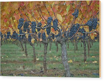 Wine Grapes - Oregon - Willamette Valley Wood Print by Jeff Burgess