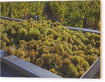 Wine Harvest Wood Print by Garry Gay