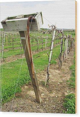 Wine Season Wood Print by Todd Sherlock