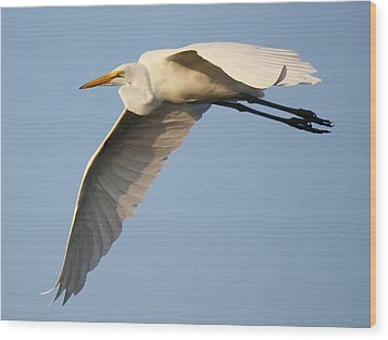 Wing Down Wood Print by Paulette Thomas