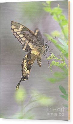 Winged Ballet Wood Print by Anne Rodkin