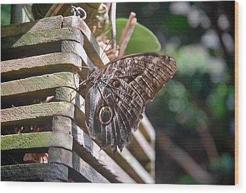 Winged Wood Wood Print by Robert Meyers-Lussier