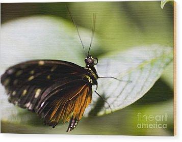 Wings Wood Print by Leslie Leda