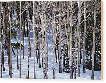 Winter Aspens Wood Print by Colleen Coccia