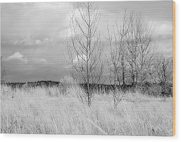 Wood Print featuring the photograph Winter Bare by Kathleen Grace